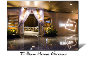 Trillium-homegrown